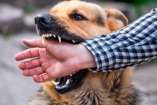 Бешенство от укуса собаки